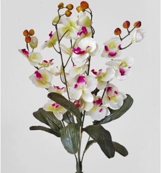 Орхидея куст, букет 5 веточек